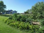 2015 garden and house 8-8-15