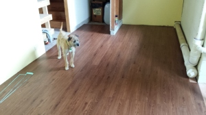 Murphy checking out the new laundry room floor 7-3-15