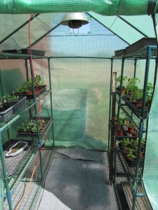 greenhouse-set-up-4-17-16